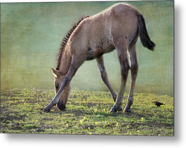 Bella's Filly And A Friend Metal Print