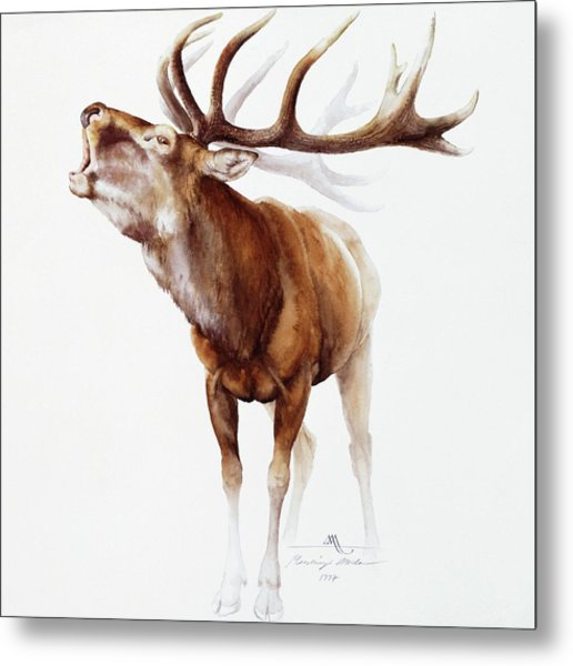Belling Stag Watercolor Metal Print