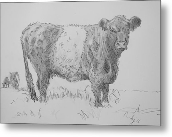 Belted Galloway Cow Pencil Drawing Metal Print