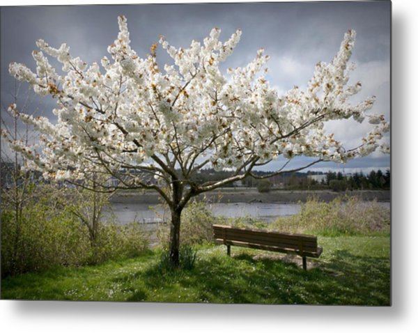 Bench And Blossoms Metal Print