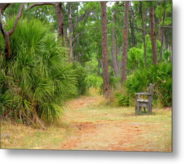 Bench On The Nature Walk Metal Print by Rosalie Scanlon