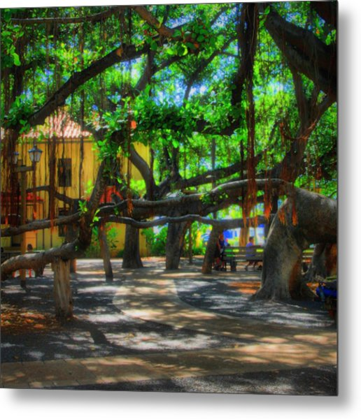 Beneath The Banyan Tree Metal Print