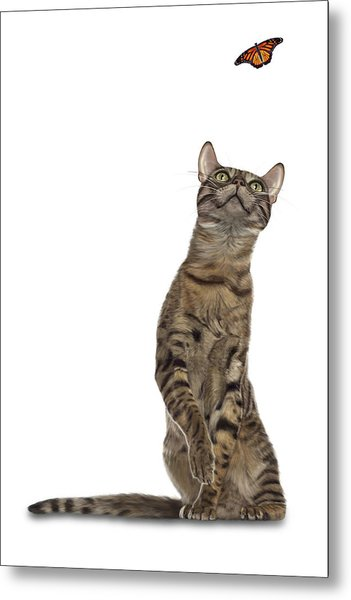 Bengal Cat With Butterfly Metal Print