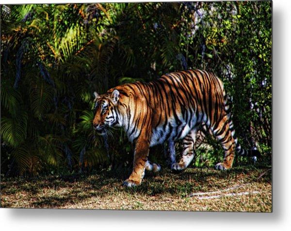 Bengal Tiger - Rdw001072 Metal Print