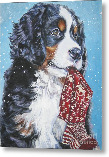 Bernese Mountain Dog Xmas Stocking Metal Print