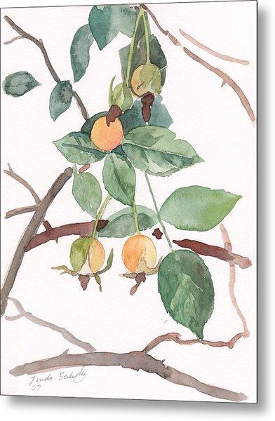 Berries In Pink Light Metal Print by Linda Berkowitz