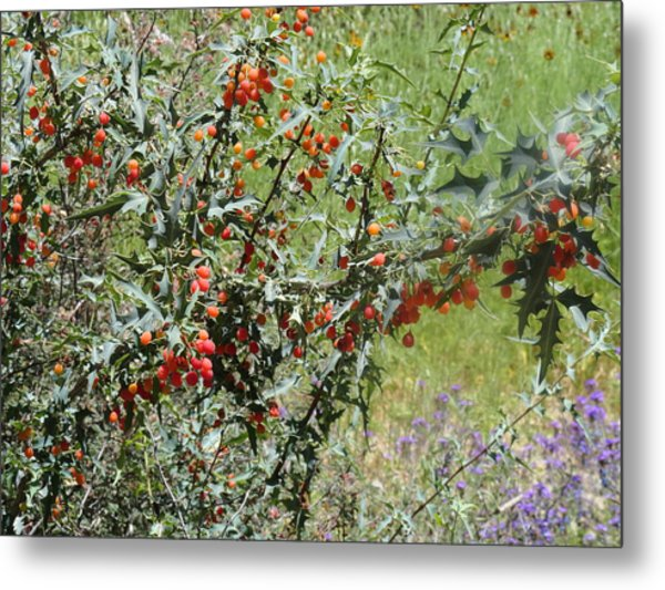 Berries On The Vine Metal Print
