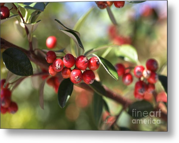 Berry Delight Metal Print
