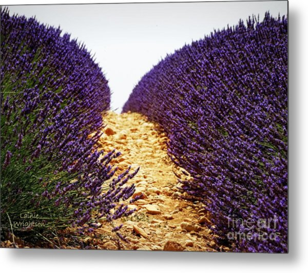 Between The Purple Metal Print
