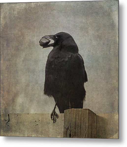 Metal Print featuring the photograph Beware Of Crows by Sally Banfill