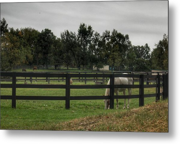 1004 - Beyond The Fence White Horse Metal Print