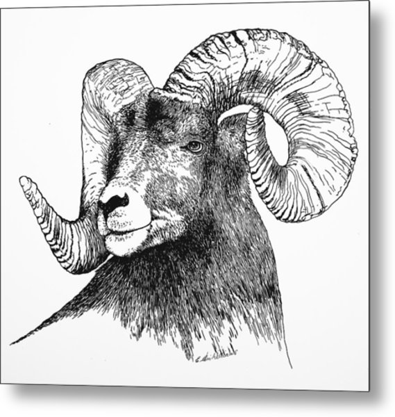 Big Horned Sheep Metal Print