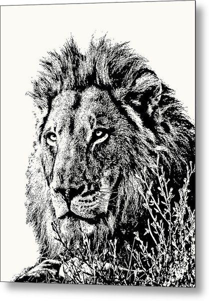 Big Male Lion Portrait Metal Print
