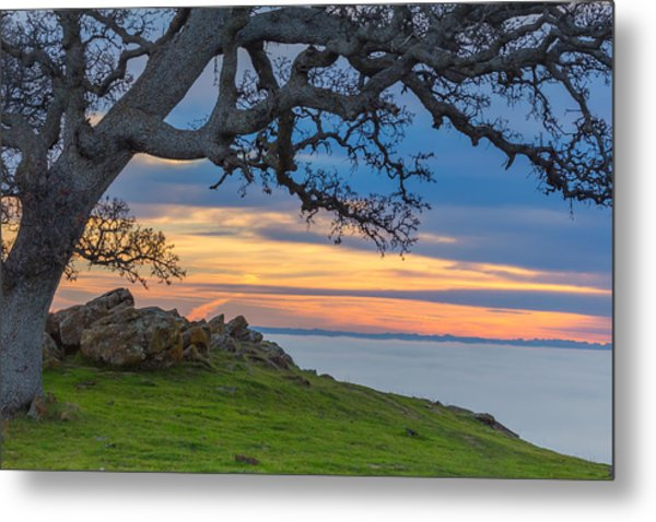 Big Oak Above Fog Metal Print
