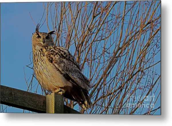 Big Owl II Metal Print