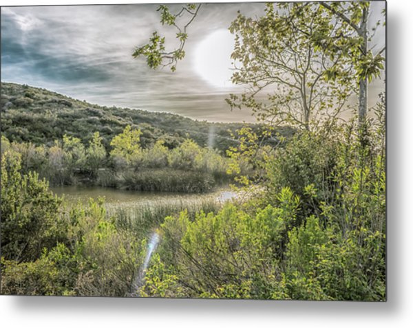 Metal Print featuring the photograph Big Sun by Alison Frank