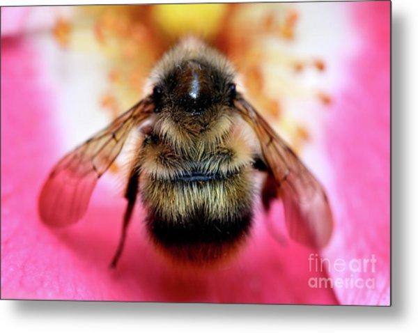 Big Time Bee Close Up Metal Print by Terry Elniski