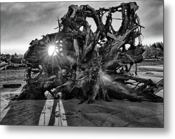 Big Tree On The Beach At Sunrise In Monochrome Metal Print