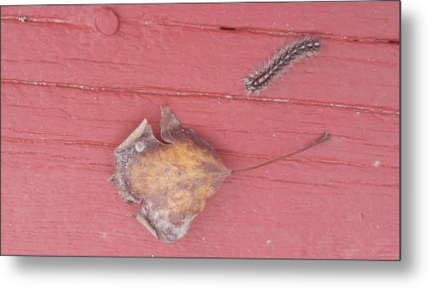 Bigger Than Me Caterpillar Leaf Metal Print