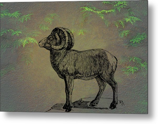 Bighorn Sheep  Metal Print