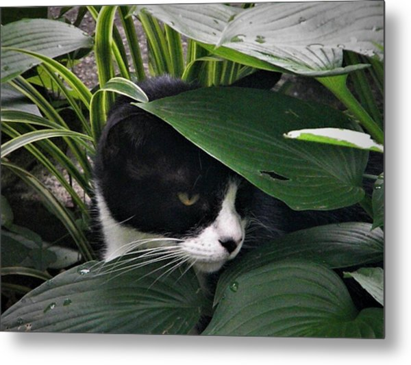 Binx Our Feral Cat Metal Print