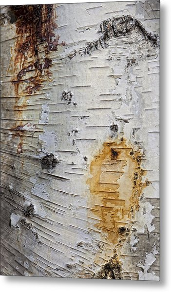 Birch Bark 2 Metal Print
