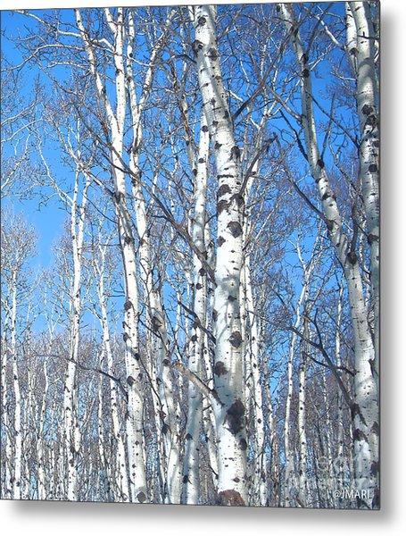 Birch Sky Metal Print