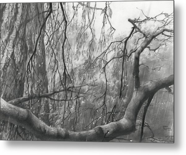 Metal Print featuring the drawing Birch Tree In Rain by Denis Chernov