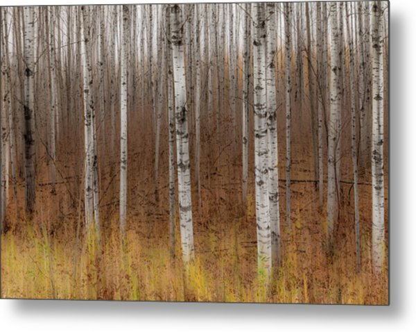 Birch Trees Abstract #2 Metal Print