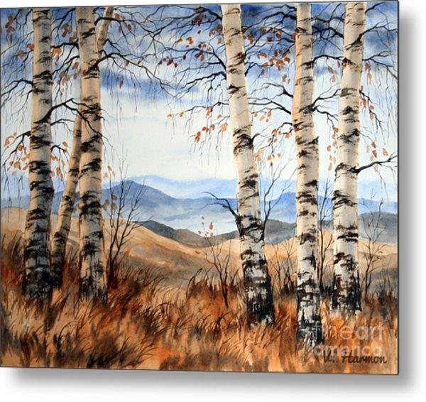 Birch Trees At Crawford Notch -1 Metal Print by Varvara Harmon