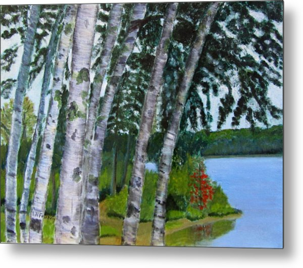Birches At First Connecticut Lake Metal Print