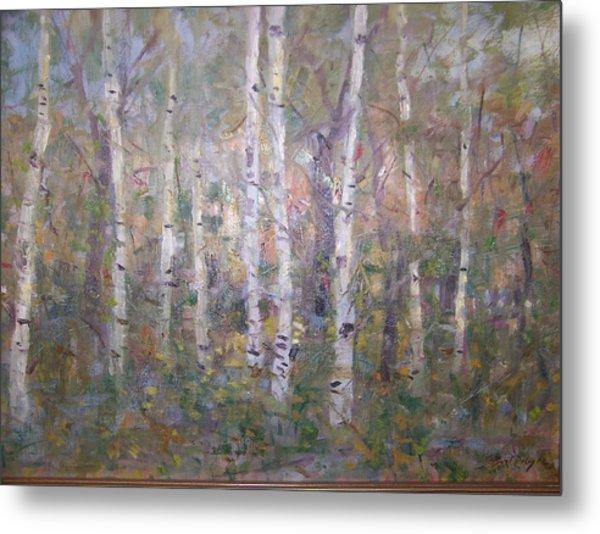 Birches. Metal Print