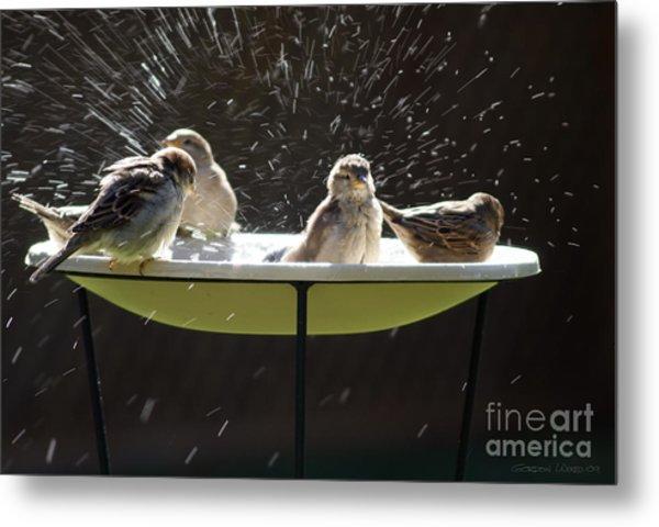 Bird Bathing Spree Metal Print by Gordon Wood
