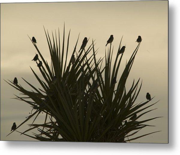 Bird Bush Metal Print by Clyde Replogle