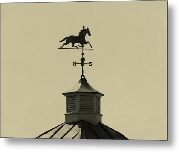 Bird Direction Metal Print by JAMART Photography