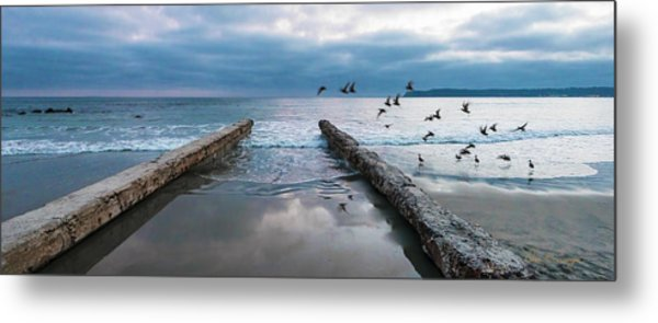 Metal Print featuring the photograph Bird Flight by Dan McGeorge