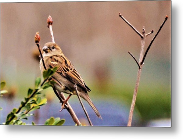 Bird In The Cold Metal Print
