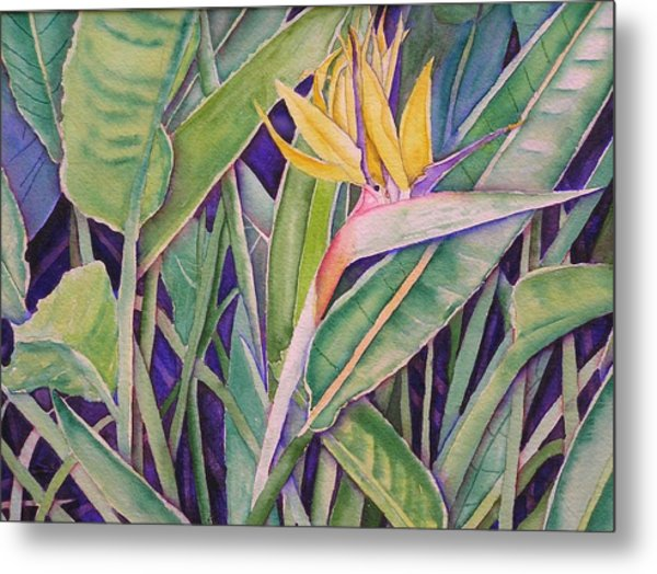 Bird Of Paradise Metal Print by Laurie Balla