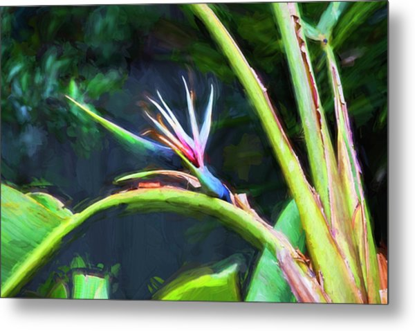 Bird Of Paradise Strelitzia Reginae 003 Metal Print