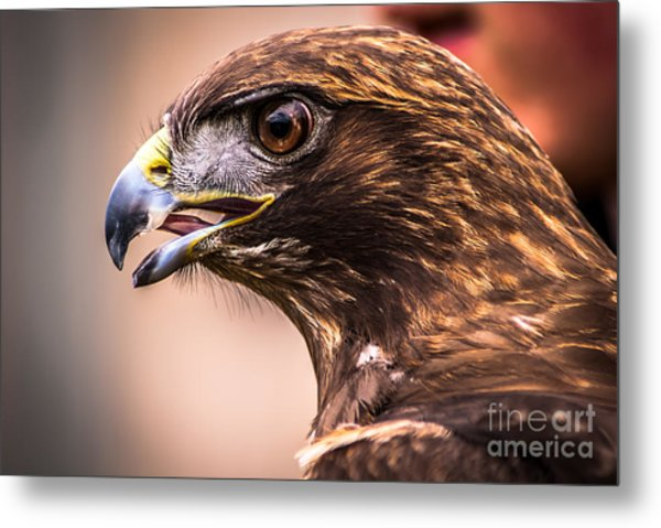 Bird Of Prey Profile Metal Print