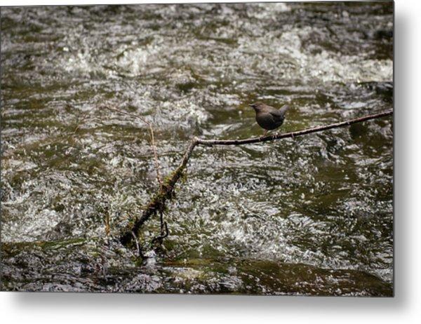 Bird On A River Metal Print