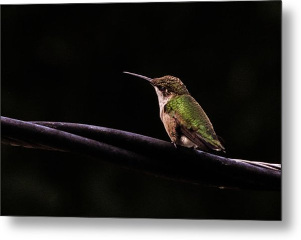 Bird On A Wire Metal Print