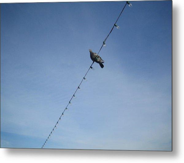 Bird On A Wire Metal Print by Tiara Moske