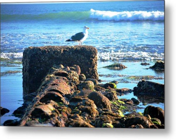 Bird On Perch At Beach Metal Print