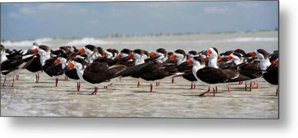 Bird Party Metal Print