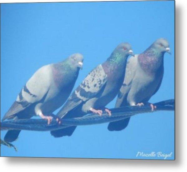 Bird Trio Metal Print