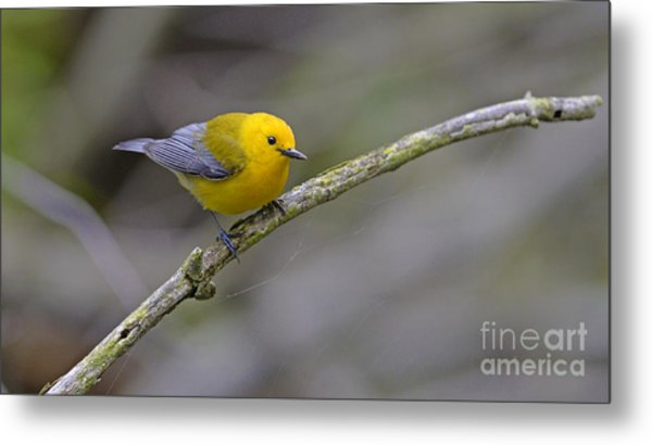 Birder's Dream Metal Print