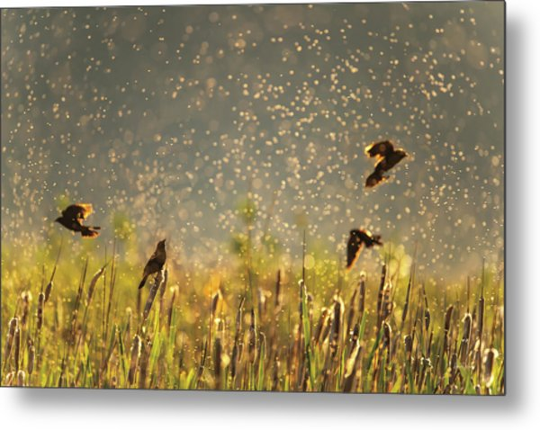 Metal Print featuring the photograph Birds And Bugs by Leland D Howard