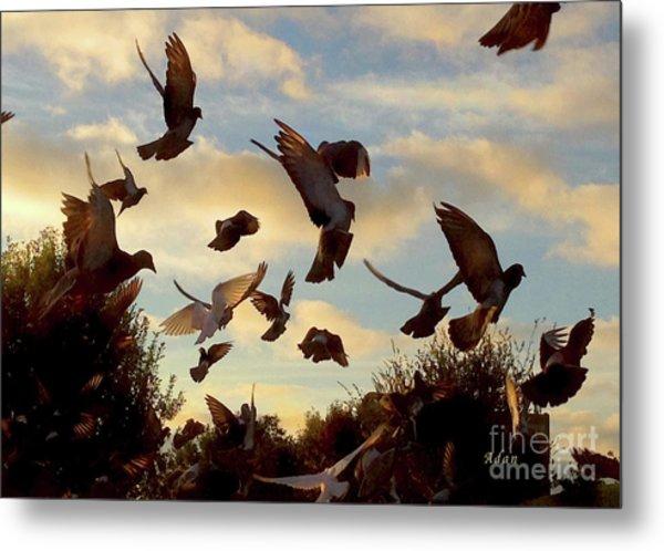Birds And Fun At Butler Park Austin - Birds 1 Metal Print