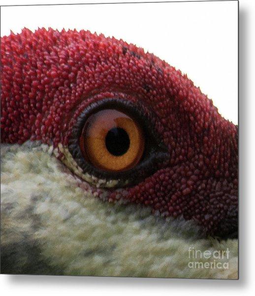 Birds Eye Metal Print